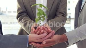 Close up of business colleagues holding plant together