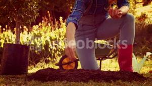 Woman digging soil and planting flower