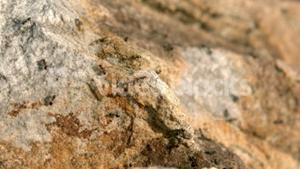 Close up view of insects on rock
