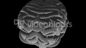 Human Brain 3D Animation