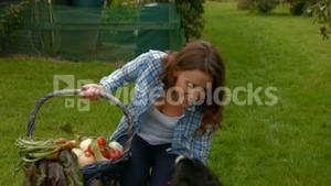 Pretty young woman with a basket of vegetables petting a dog