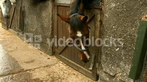 Clever horse opening the stable