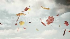 Autumn leaves falling on camera