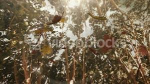 Autumn leaves falling on the camera