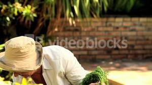 Mature woman picking up root vegetables in the garden