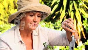 Happy mature woman potting plants