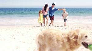 Cute family playing ball with the dog