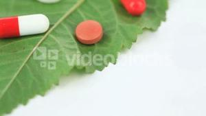 Close up of a green leaf with pills turning on itself