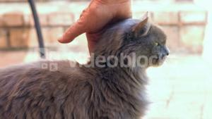 View of feminine hands petting a cat