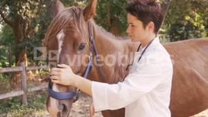 Vet taking care of a horse