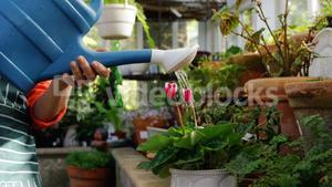 Mature woman watering pot plant