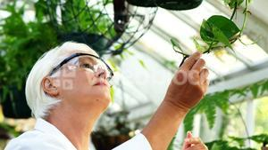 Female scientist checking plants