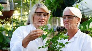 Female scientists checking plants