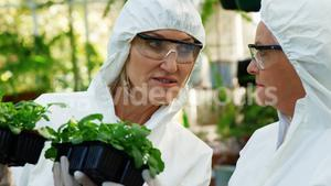 Female scientists having discussion on plant