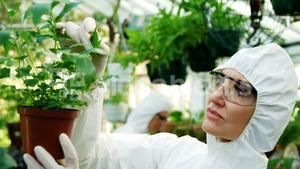 Female scientist checking pot plant
