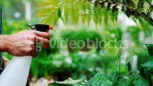 Man spraying water on plants