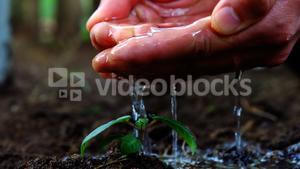 Gardener pouring water over sapling with his hands