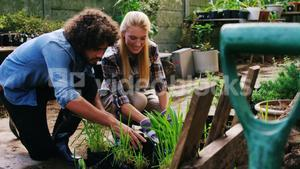 Gardeners interacting and looking at plants