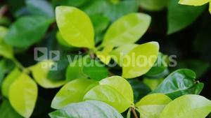 Leaves of plant in greenhouse