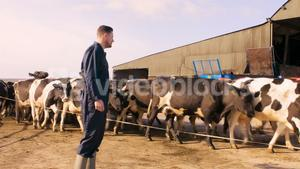 Cattle farmer with herd of cattles