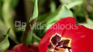 Close-up of red flower in flower shop