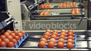 Eggs cartons moving on the production line