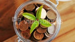 Plant growing out of coins bottle