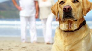 Close-up dog relaxing on beach