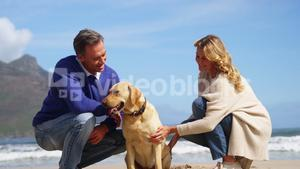 Happy mature couple petting their dog on the beach