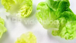 Close-up of lettuce
