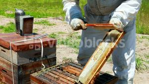 Beekeeper brushing off the honey bee from honey comb