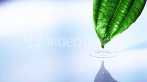 Water drop falling from leaf into water pool in slow motion