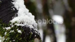 Tree trunk covered with snow