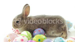 Easter eggs and Easter bunny