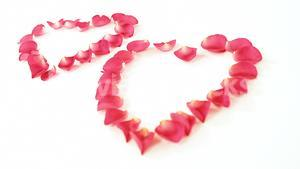 Rose petals forming heart shape against white background