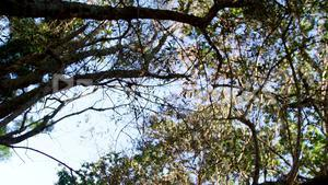 Tropical forest with trees and sky